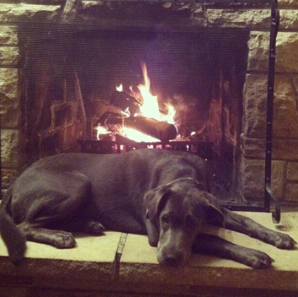 Lou's New Years Resolutions: Take More Naps by the Fire. Nailed it!