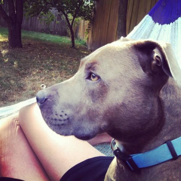 dog in hammock